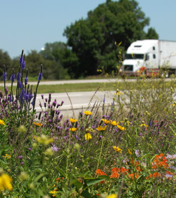 Roadside vegetation management